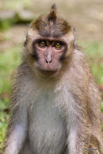 makaak National Park Pangandaran