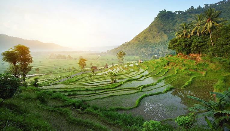 Bali traveldeal