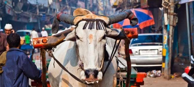 India rondreis: 16 dagen voor €1199!