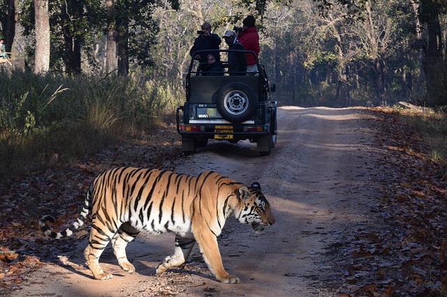 goa tiger india
