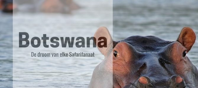 Botswana self drive: tips en beste route voor een safari