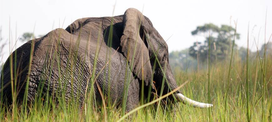 olifant, botswana