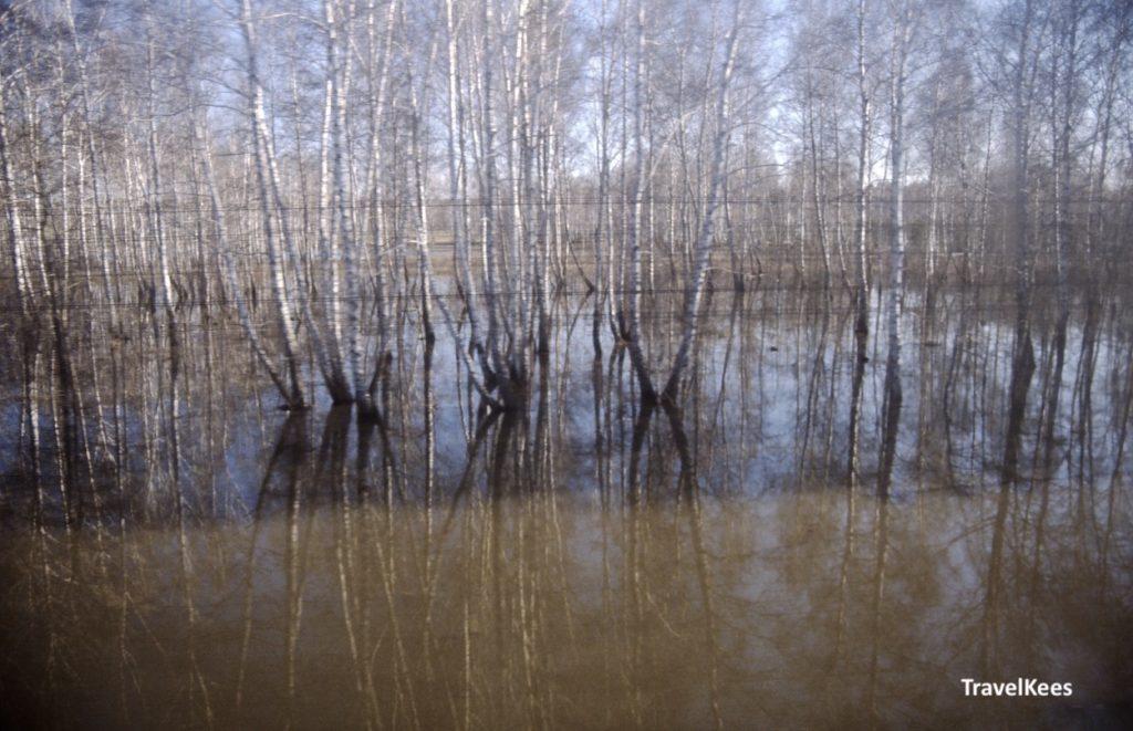 berken in Siberië
