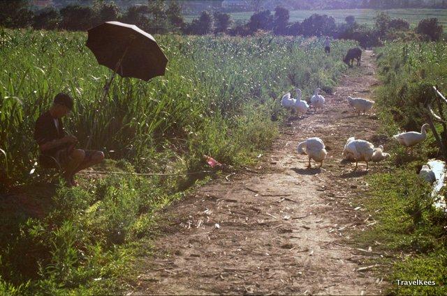 Yunnan rijstvelden