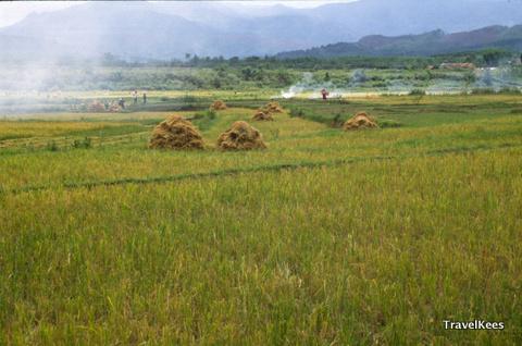 Er zijn veel mensen aan het werk op de rijstvelden rond Jinghong