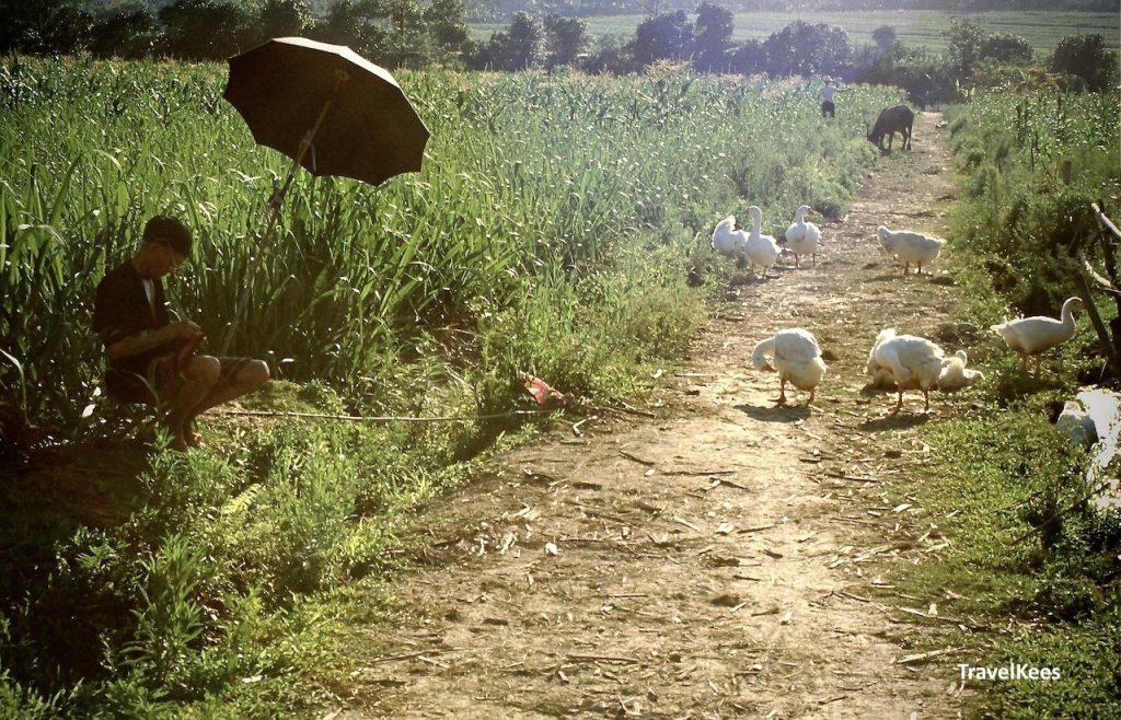 chinees platteland, ganzen, boer, de weg naar xishuangbanna