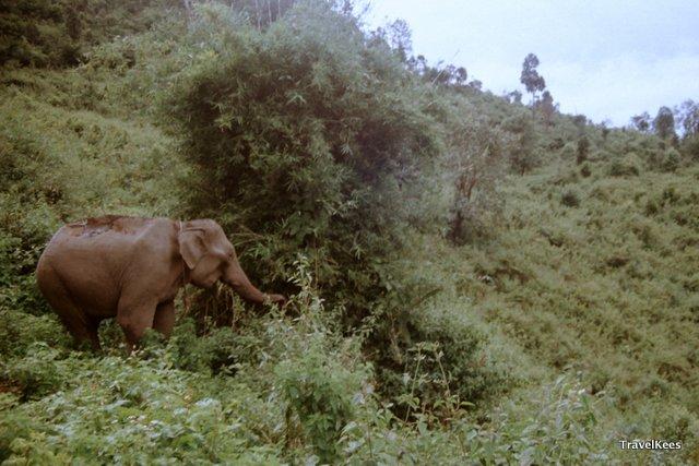 olifant tijdens jungletrek