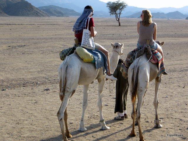 egypte woestijn kameel bij marsa alam