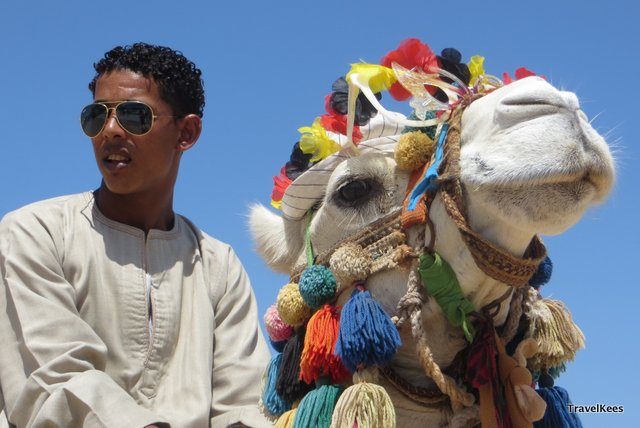 rode zee egypte kameel
