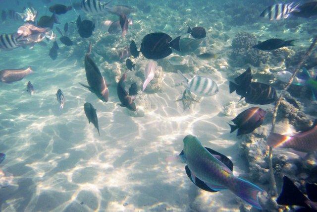 rode zee, egypte, duiken, marsa alam
