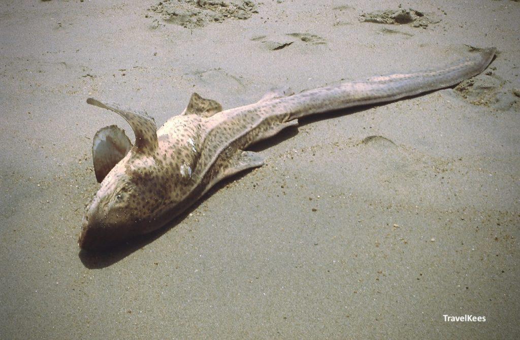 vis op strand