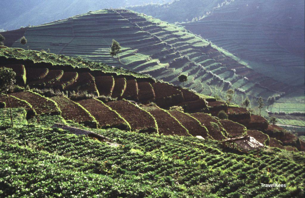 terraslandbouw, java