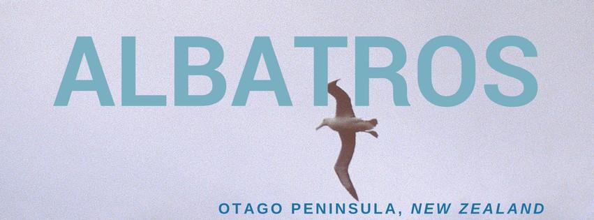 albatrossen