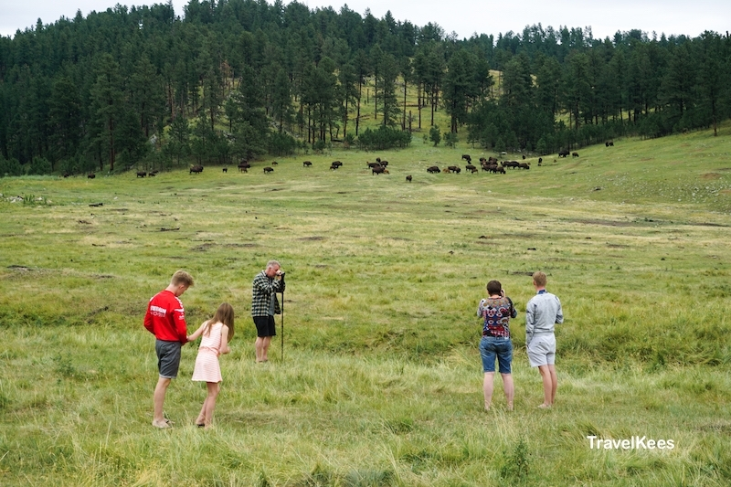 Custer State Park, Black Hills, bizons, wild spotten