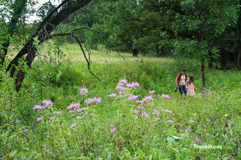 Custer State Park, Prairie Trail, flowers, Black Hills