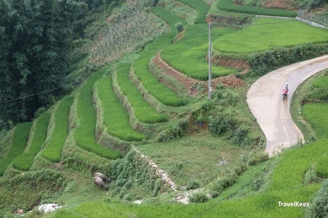 rijstterrassen bij sapa in vietnam