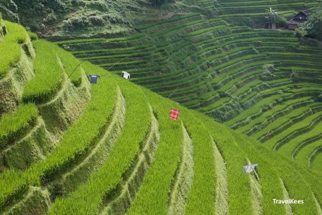 rijstterrassen in sapa, vietnam