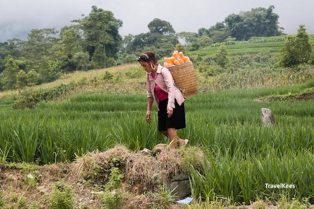 locale vrouw in de rijstvelden, sapa