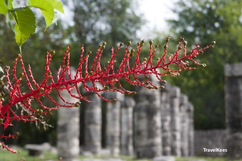 flora in het archeologische park