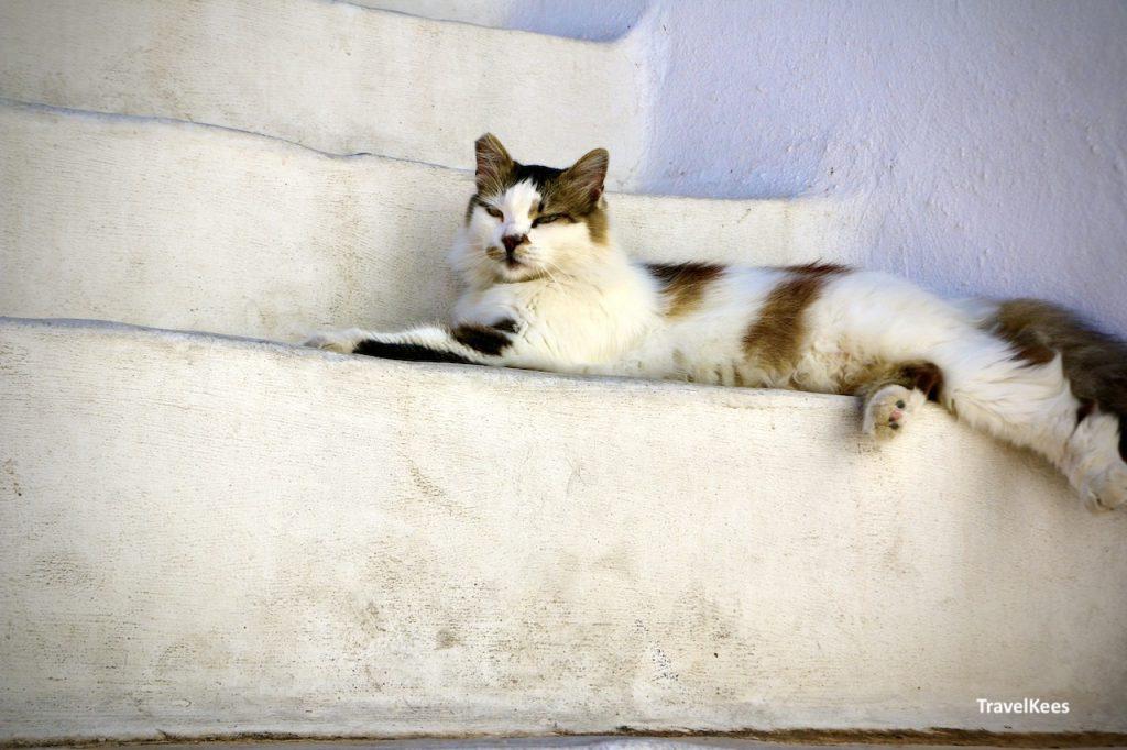 kat op trap in Lefkes, Paros